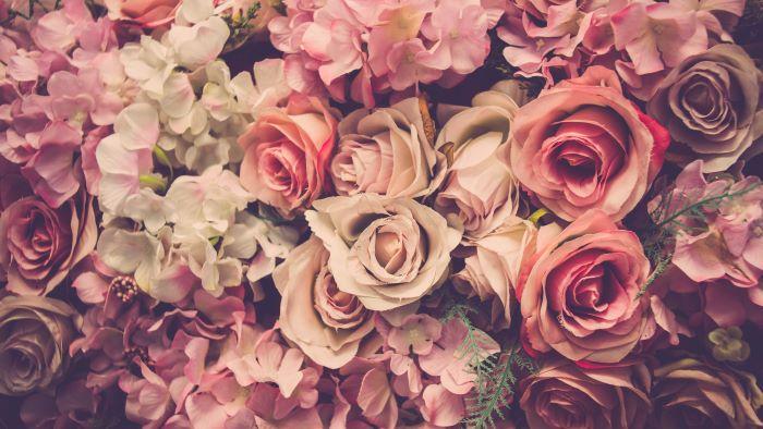 goedkope rozen uit kenia; belastingontwijking