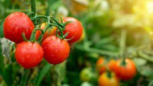 btw omlaag op fruit en groente
