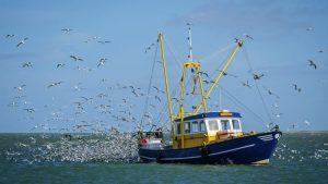 steunmaatregel visserij
